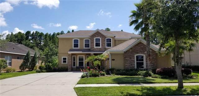 19232 Climbing Aster Drive, Tampa, FL 33647 (MLS #T3111012) :: Bustamante Real Estate