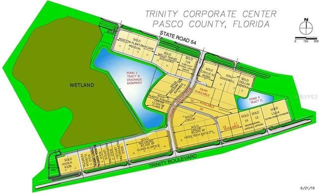 18 Trinity, Odessa, FL 33556 (MLS #W7515789) :: The Duncan Duo Team