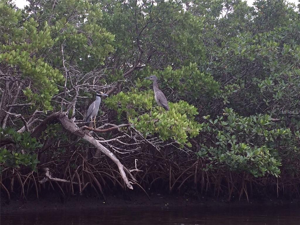 Joes Island - Photo 1