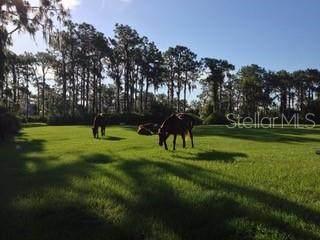 30621 Saddlebag Trail, Myakka City, FL 34251 (MLS #A4469054) :: Griffin Group