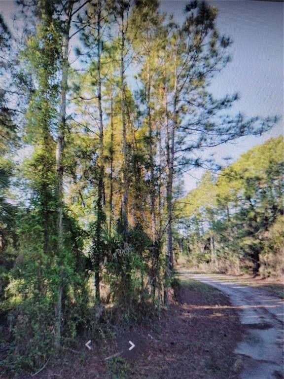 Lutz Road - Photo 1