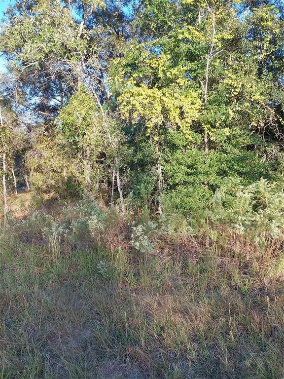 15136 Duck Hawk Road, Weeki Wachee, FL 34614 (MLS #A4516128) :: Everlane Realty