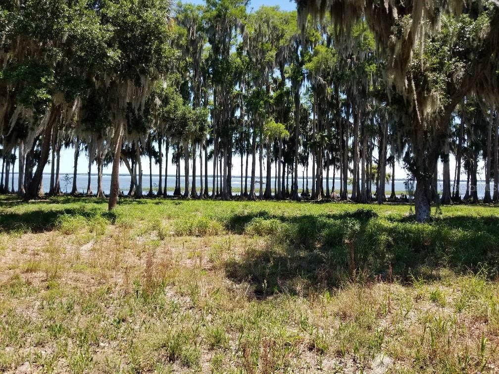 34900 Golden Tree Drive - Photo 1