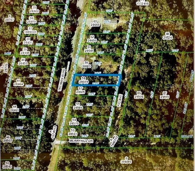 Fig Avenue, Webster, FL 33597 (MLS #G5029404) :: Realty Executives Mid Florida