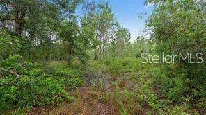 Oil Well Road, Clermont, FL 34714 (MLS #G5029511) :: The Figueroa Team