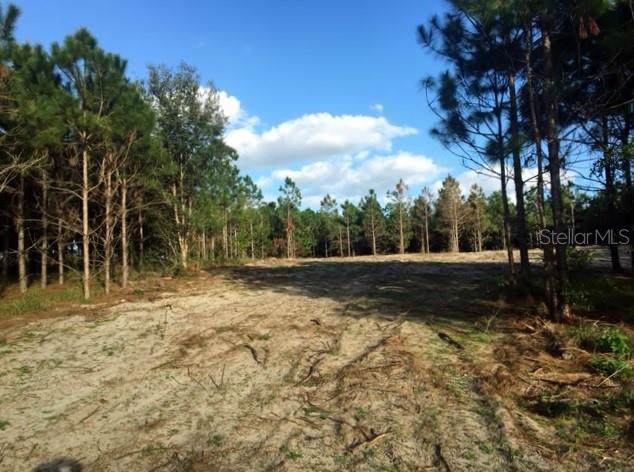 2856 Rattlesnake Road, Lake Wales, FL 33898 (MLS #K4900729) :: GO Realty