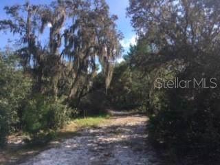 Roberts Road, Ona, FL 33865 (MLS #L4912031) :: The Duncan Duo Team