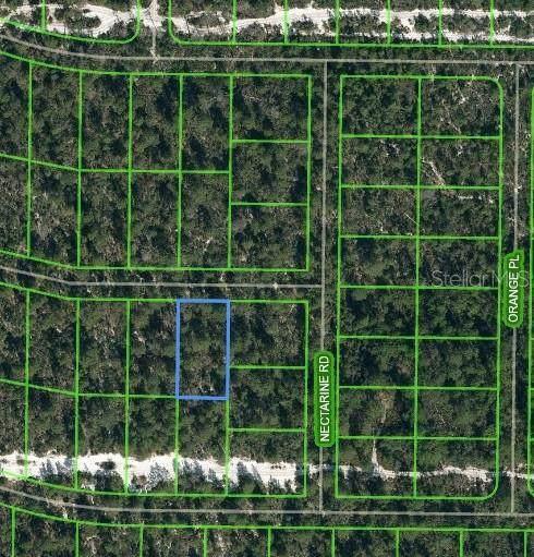 2100 Iris Avenue, Sebring, FL 33875 (MLS #L4922454) :: Everlane Realty