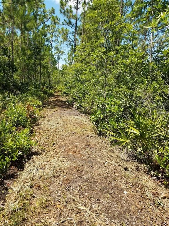 401 Volusian Forest Trail, Pierson, FL 32180 (MLS #O5719451) :: G World Properties