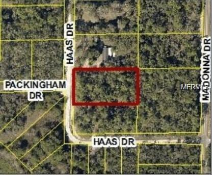 34135 Haas Drive, Webster, FL 33597 (MLS #O5735050) :: The Duncan Duo Team