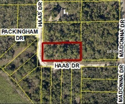 34195 Haas Drive, Webster, FL 33597 (MLS #O5735053) :: The Duncan Duo Team