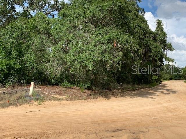 Bailey Palm Drive, Groveland, FL 34736 (MLS #O5792796) :: White Sands Realty Group