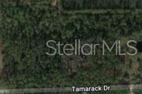 3658 Tamarack Drive, Ormond Beach, FL 32174 (MLS #O5793939) :: Cartwright Realty