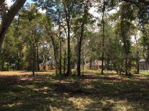 Loper Street, Yalaha, FL 34797 (MLS #O5873267) :: Rabell Realty Group