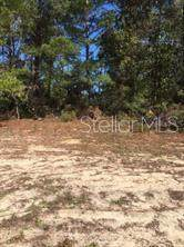 Fisher Loop Court, Ocklawaha, FL 32179 (MLS #O5914111) :: Young Real Estate
