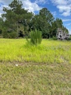 2055 Pecos Drive, Poinciana, FL 34759 (MLS #O5949896) :: Dalton Wade Real Estate Group