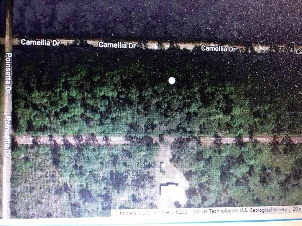 217 Camellia Drive - Photo 1