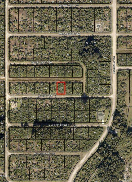 847 SW Bitlis Street, Palm Bay, FL 32908 (MLS #OM544005) :: MVP Realty