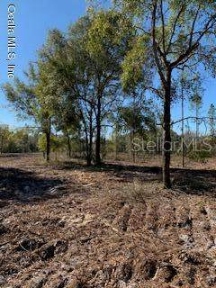 TBD 353 Highway - Photo 1