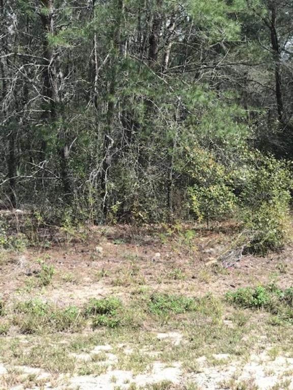 0 SW 162ND ST Road, Ocala, FL 34473 (MLS #OM608816) :: Bustamante Real Estate