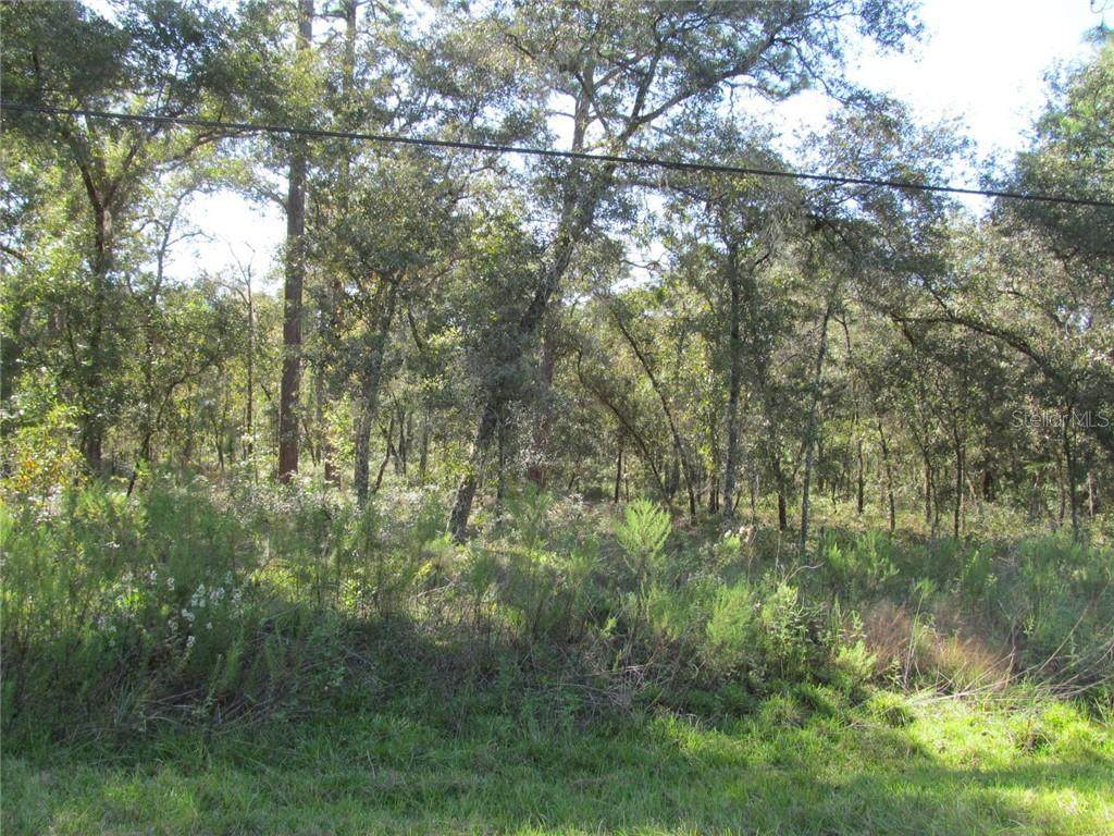 00 Buena Vista Rd - Photo 1