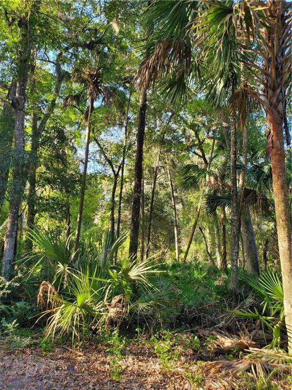 4626 S Flambeau, Homosassa, FL 34448 (MLS #OM616836) :: Premier Home Experts