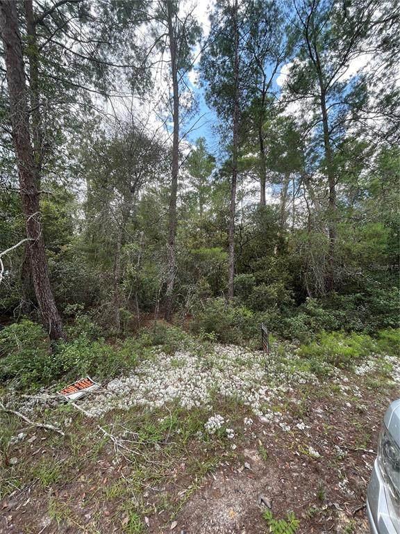 133 Escambia Drive, Florahome, FL 32140 (MLS #OM625411) :: Delgado Home Team at Keller Williams