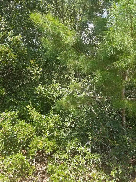 Lot 1 SE 142 Street, Summerfield, FL 34491 (MLS #OM625796) :: Orlando Homes Finder Team