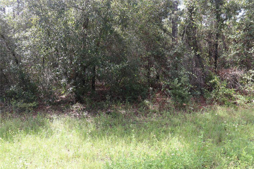 3378 Early Place - Photo 1
