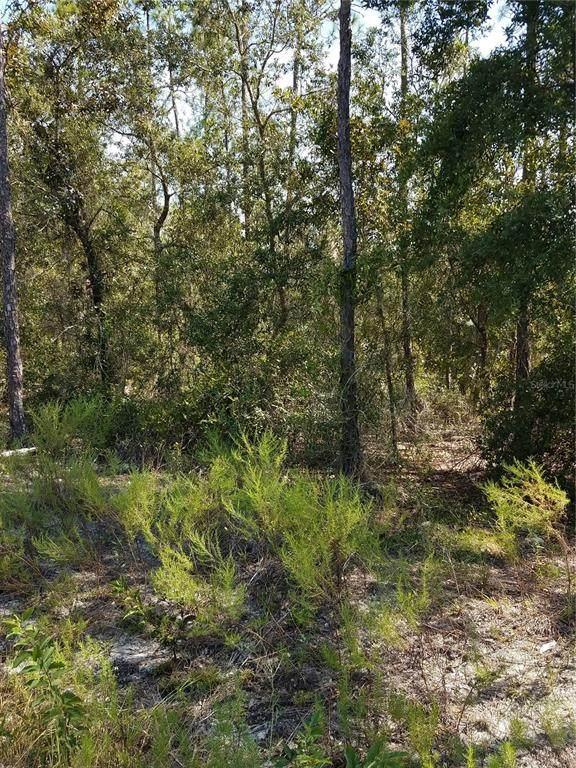 OOO Freshwater Court, Dunnellon, FL 34431 (MLS #OM628848) :: Charles Rutenberg Realty