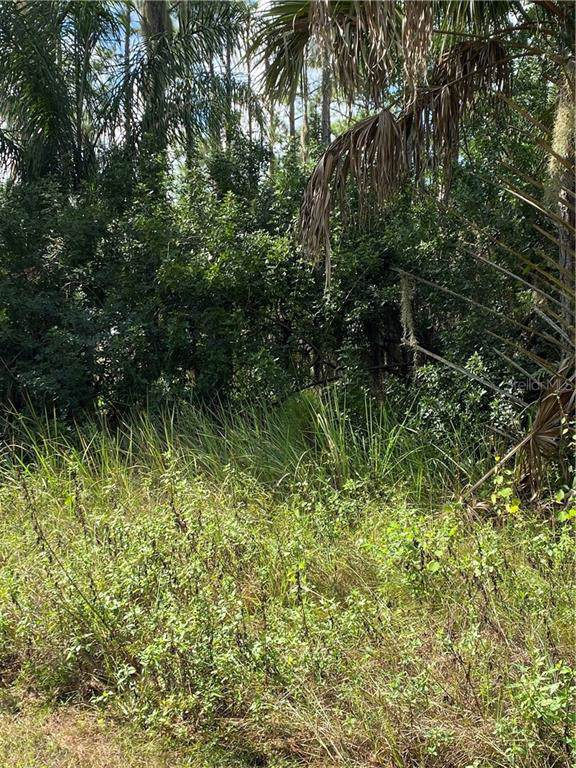 Deland Avenue, Lake Wales, FL 33898 (MLS #P4908298) :: Cartwright Realty
