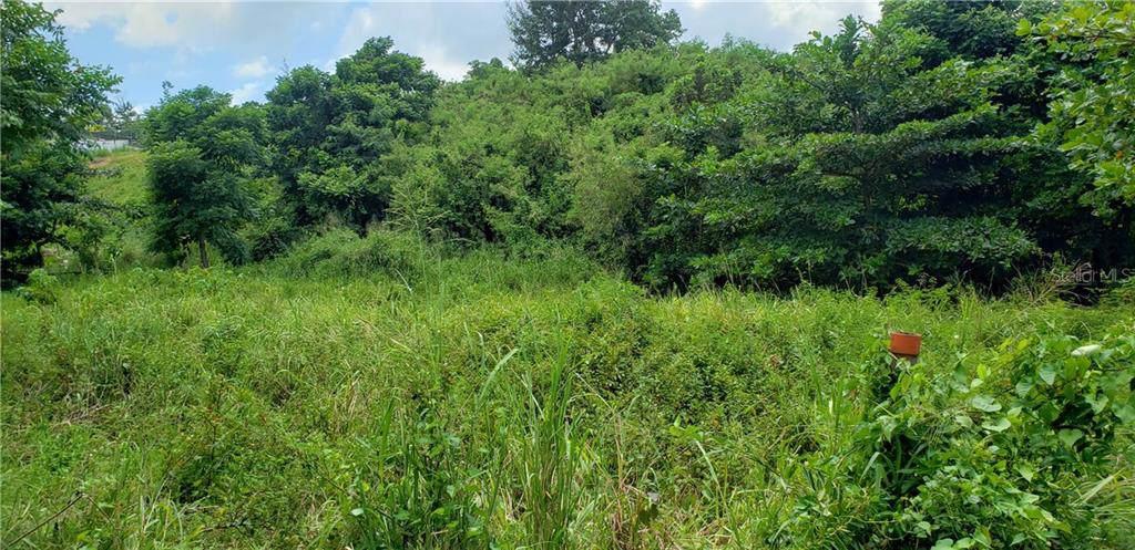 PR 115 Km. 20.5 Bo. Guaniquilla - Photo 1