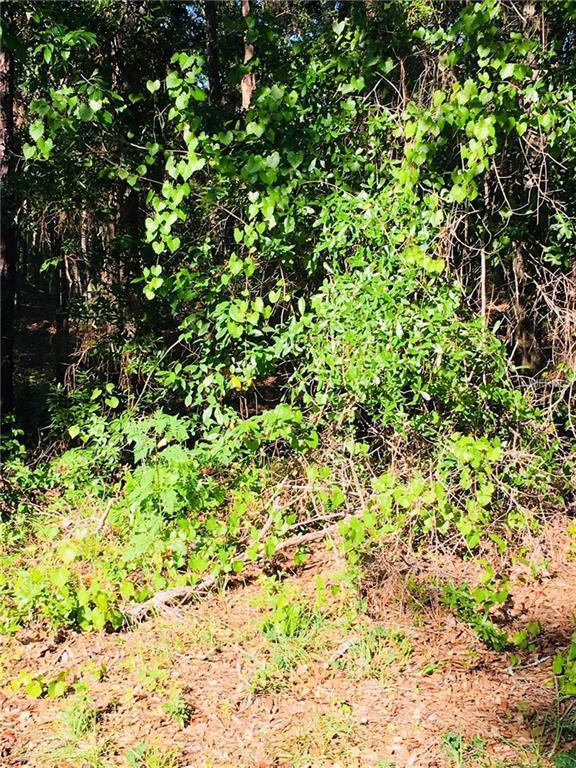 9475 N Pineview Way, Citrus Springs, FL 34434 (MLS #R4900122) :: The Lockhart Team