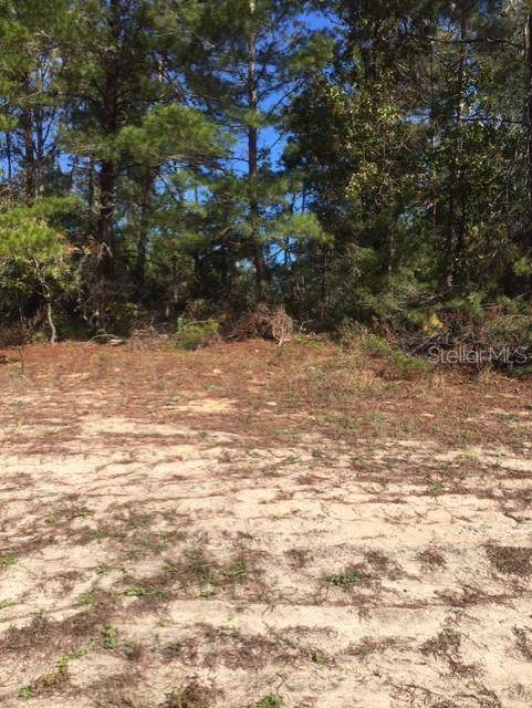 Fisher Loop Court, Ocklawaha, FL 32179 (MLS #R4902719) :: The Duncan Duo Team