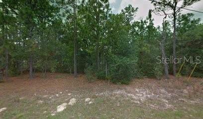 7984 N Primrose Drive, Citrus Springs, FL 34434 (MLS #R4902884) :: Rabell Realty Group