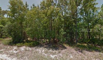 10 Torenia Verbenas Court, Homosassa, FL 34446 (MLS #R4902906) :: Team Borham at Keller Williams Realty