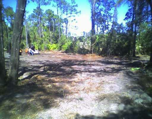 Windy Pine Way, Oviedo, FL 32765 (MLS #S4702217) :: Premium Properties Real Estate Services