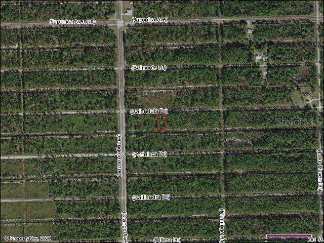 Calendula Drive, Lake Wales, FL 33898 (MLS #S5028932) :: Lock & Key Realty