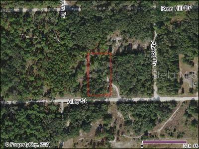 Alloy Street, Webster, FL 33597 (MLS #S5046495) :: Bridge Realty Group