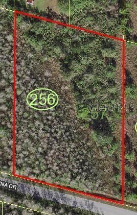 Luna Drive, Saint Cloud, FL 34771 (MLS #S5046665) :: BuySellLiveFlorida.com