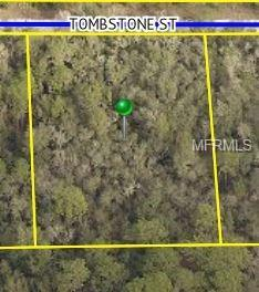 33456 Tombstone Street, Webster, FL 33597 (MLS #T3158169) :: Griffin Group