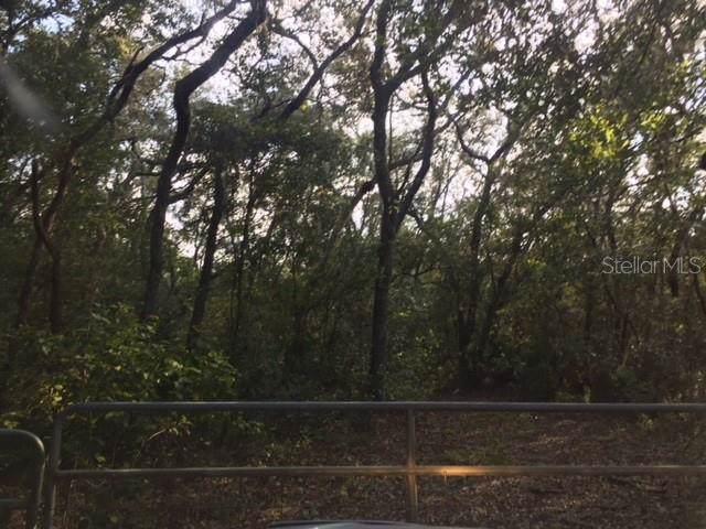 0 Tworut, Lacoochee, FL 33537 (MLS #T3196681) :: Sarasota Home Specialists