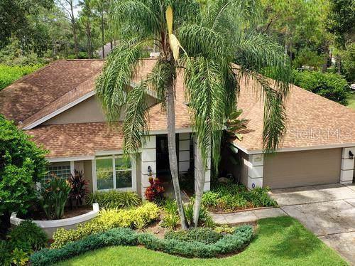 17314 Hialeah Drive, Odessa, FL 33556 (MLS #T3204035) :: GO Realty