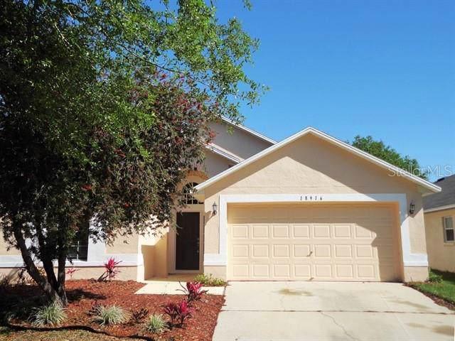 18916 Wood Sage Drive, Tampa, FL 33647 (MLS #T3204203) :: Team Bohannon Keller Williams, Tampa Properties