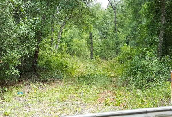 Address Not Published, Fort Mc Coy, FL 32134 (MLS #T3206592) :: Bustamante Real Estate