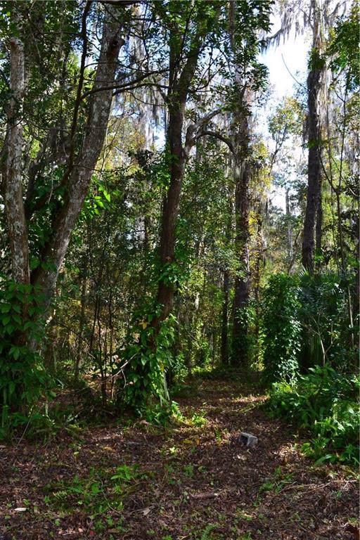 Olive Street, Brooksville, FL 34601 (MLS #T3216070) :: 54 Realty