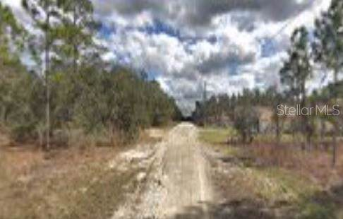 12136 Snow Goose Avenue, Brooksville, FL 34614 (MLS #T3216604) :: Cartwright Realty