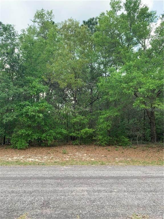 10036 N Pioneer Point, Citrus Springs, FL 34434 (MLS #T3234130) :: Bustamante Real Estate