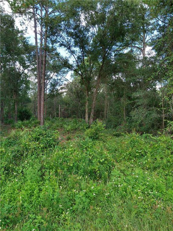 Treiman Boulevard, Webster, FL 33597 (MLS #T3263994) :: Armel Real Estate