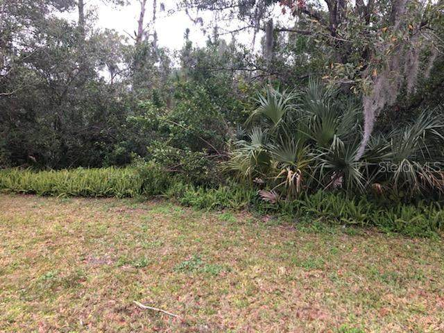 3179 Duane Avenue, Oldsmar, FL 34677 (MLS #T3283954) :: Everlane Realty